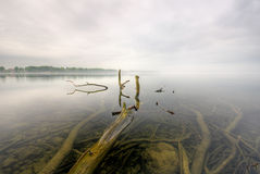 Lake. A foggy day at the lake with a peek into the water Royalty Free Stock Image