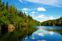 Lake. Beautiful lake in the forest