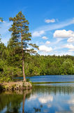 Lake. Beautiful lake in the forest Stock Photos