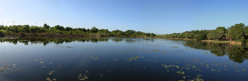 Lake. Taylor, Florida, panoramic view, calm  with trees on shore and lily pads floating royalty free stock image