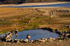 Lake. People in a lake Stock Photos