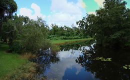 Lake. A picture of a still lake, surrounded by grass and trees, images of which are reflected in the water royalty free stock photography