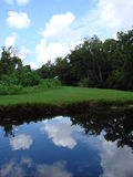 Lake. View of the grass, trees, lake and the sky reflecting in the water Royalty Free Stock Photo