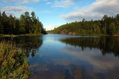 Lake. In sunny pine forest in Algonquin Park Royalty Free Stock Images