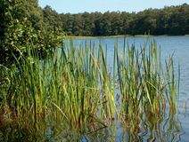 Lake. In the forest Stock Photos