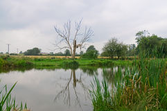 Lake. A tree reflection in a lake Stock Photo