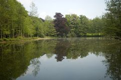 Lake. Surrounded with trees Stock Images