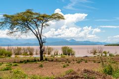 Lake Abaya. Near Arba Minch in Nechisar NP Stock Images