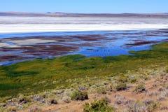 Lake Abert Wildlife and Scenery Royalty Free Stock Image