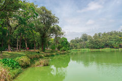 The lake in the Aclimacao Park in Sao Paulo stock photography