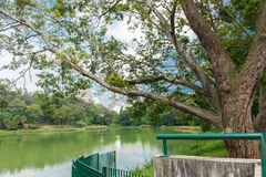 The lake in the Aclimacao Park in Sao Paulo. The lake in the Aclimacao Park. It was the first zoo in Sao Paulo and founded by Carlos Botelho, Brazil Royalty Free Stock Image