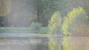 Lake pond in the sun reflected from the water light shimmers, insects fly over the water on the background of green trees and shru. The lake is against a stock footage