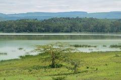 Lake against a mountain background, Lake Elementaita royalty free stock photos