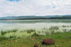 Lake against a mountain background, Lake Elementaita royalty free stock image