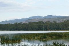 Lake against a mountain background, Lake Elementaita stock images