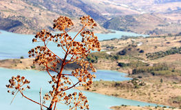 Lake and agave near Zahara de la Sierra, Andalusia Royalty Free Stock Photo