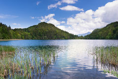Lake alatsee in bavaria germany with reeds Royalty Free Stock Photos