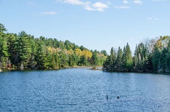 Lake in Algonquin Park Royalty Free Stock Images