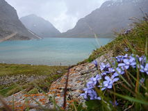 Lake Alla Kol in Kyrgyzstan with a bunch of small blue flowers in forefront Royalty Free Stock Image