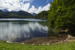 Lake Alpsee, with swans, Bavarian Alps, Germany. Royalty Free Stock Photo