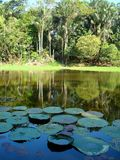 Lake in the Amazon Rain Forrest Royalty Free Stock Photography