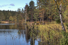 Lake amongst the woods in Sweden Royalty Free Stock Images