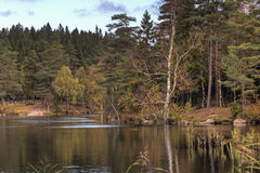 Lake amongst the woods in Sweden Royalty Free Stock Photo