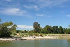 Lake And Horses Stock Photos