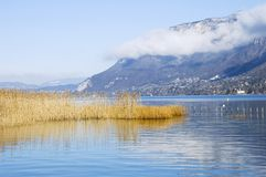 Lake of Annecy and reeds. Lake of Annecy with reeds in the foreground Royalty Free Stock Image