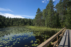 Lake with aquatic plants Royalty Free Stock Images