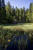 Lake with aquatic plants Stock Image
