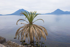 Lake Atitlan Stock Image