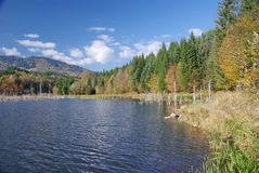 Lake in autumn. Natural lake in the mountains (Cuejdel Lake in Stanisoara mountains, Romania Royalty Free Stock Photos