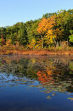 Lake in the autumn. Reflexions of color trees in lake in the autumn Stock Photography