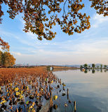 Lake autumn Stock Images
