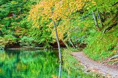 Lake in the Autumn Forest Royalty Free Stock Photography