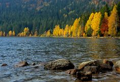Lake in autumn forest Stock Images