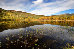 Lake. Autumn in Norway on a lake with water plants Stock Images