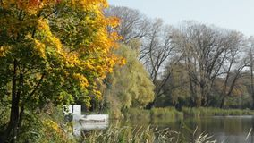 Lake in the autumn park. A lake among the trees. Beautiful autumn park stock video footage