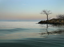 Lake Background with lone tree Stock Photos