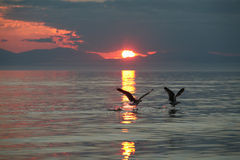 Lake Baikal Fotografering för Bildbyråer