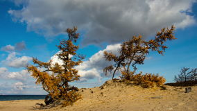 Lake Baikal beach. Siberia. Blue sky, moving clouds, sand, trees. Time lapse stock video