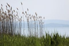 Lake Balaton near Szigliget Royalty Free Stock Photo