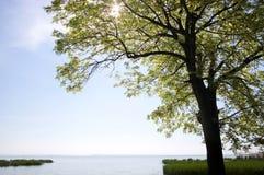 Lake Balaton near Szigliget Royalty Free Stock Images