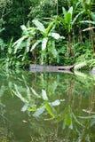 Lake Balinsasayao in Philippines Royalty Free Stock Photo