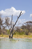 Lake Baringo, Kenya Royalty Free Stock Photo