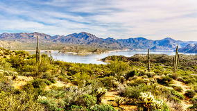 Lake Bartlett surrounded by the mountains and many Saguaro and other cacti in the desert landscape Stock Photography