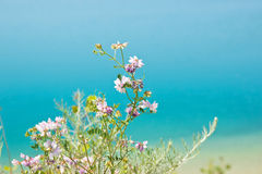 Lake Beach Flowers Royalty Free Stock Photo