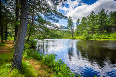 Lake at Bear Brook State Park, New Hampshire. Stock Images