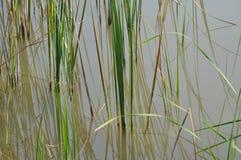 Lake. Beautiful and nice lake Royalty Free Stock Images